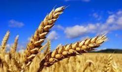 L'Agricultural Market Information System, présidé par la France, s'est réuni pour échanger sr la situation des cours des céréales et du soja.   agro-media.fr   Actualité de l'Industrie Agroalimentaire   agro-media.fr   Scoop.it