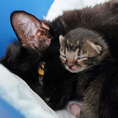 Mom Cat Finds Her Kittens A Safe Place | Cats Everywhere | Scoop.it