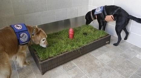 Des toilettes pour chiens de service inaugurées à l'aéroport de Détroit | CaniCatNews-actualité | Scoop.it