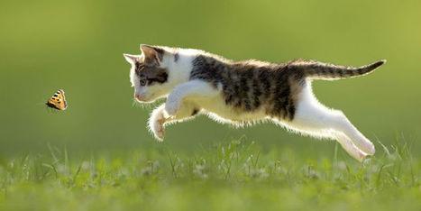 Le corps du chat a des super pouvoirs ! - Femme Actuelle | CaniCatNews-actualité | Scoop.it