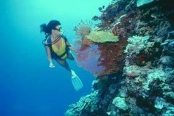 West Bay Beach Diving World Party Wonderful Hotels in Honduras | Travel Central America Information | Scoop.it