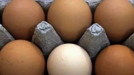 10 nutrient-dense foods | Nutrition | Scoop.it