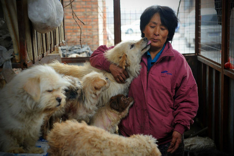 Woman Travels 1,652 Miles To Save Dogs Before Yulin Festival | Compassion in Action | Scoop.it