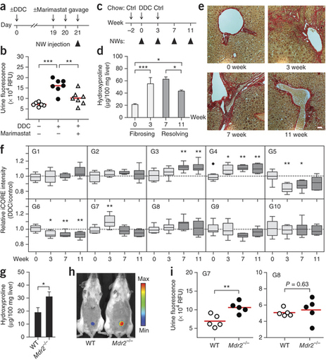 Mass-encoded synthetic biomarkers for multiplexed urinary monitoring of disease : Nature Biotechnology : Nature Publishing Group | Systems biology and bioinformatics | Scoop.it