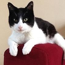 Ce chat très bruyant vient de faire son entrée dans le livre des records   CaniCatNews-actualité   Scoop.it