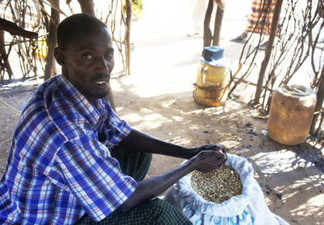 Community-based approach to climate change for smallholder farmers - Local First | Climate Smart Agriculture | Scoop.it
