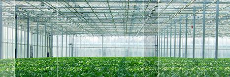 Interesting upcomingSeed meeting: Fifth Dutch Seed Symposium | Wageningen Seed Lab | Scoop.it