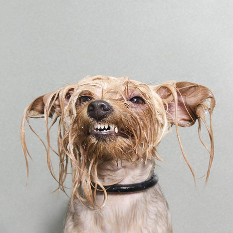 Portraits of Dogs Enjoying Bath | Designer's Resources | Scoop.it