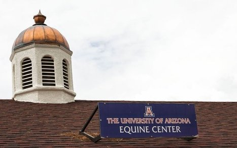 Small UA program produces big results in horse racing industry   Cronkite News (Temple, AZ)   CALS in the News   Scoop.it