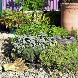 Herb Gardening Guide | Boomer Empowerment | Scoop.it