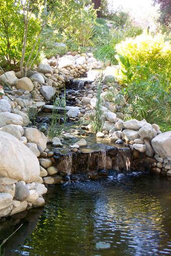 Pond display: Rock pond   Pond Talk   Scoop.it