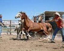 STOP THE ROUNDUP OF WILD HORSES ACROSS THE NAVAJO RESERVATION NOW - The Petition Site   horses   Scoop.it