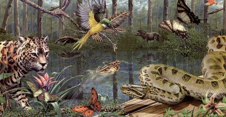 TEMA 12. Los ecosistemas. | Ciencias Naturales -Contenidos, diseño de secuencias didácticas, aula 2.0 | Scoop.it