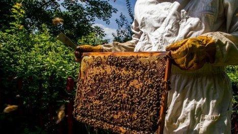 Du miel et des abeilles - France 3 Franche-Comté | Filière apicole française | Scoop.it