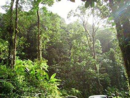 #Tropical #Forests Overexploited by #Unsustainable #Logging | Farming, Forests, Water, Fishing and Environment | Scoop.it