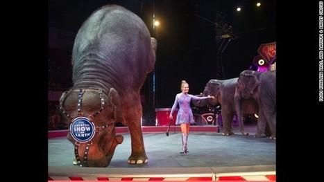 Ciudad de México prohíbe el uso de animales en los circos   Totonal and Sustainable Tourism   Scoop.it
