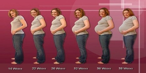 Gaining weight too fast during Pregnancy | Health | Scoop.it