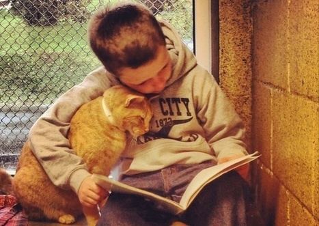 Very Adorable Pictures of Kids Reading to Homeless Cats | The Blog's Revue by OlivierSC | Scoop.it