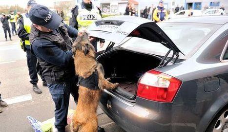 A l'école des chiens-policiers, l'apprentissage par le jeu - LExpress.fr | CaniCatNews-actualité | Scoop.it
