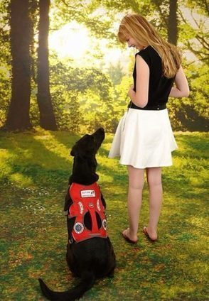 12 Common Misconceptions about Service Dogs Clarified | Animal Bliss | Animal Welfare | Scoop.it