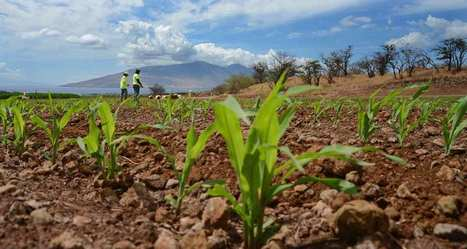 La culture d'OGM a diminué en 2015, une première depuis 20 ans | Les colocs du jardin | Scoop.it