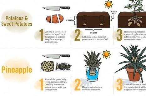23 Diagrams That Make Gardening So Much Easier | Balcony Gardening | Scoop.it