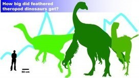 For Some Feathered Dinosaurs, Bigger Not Always Better | Research from the NC Agricultural Research Service | Scoop.it