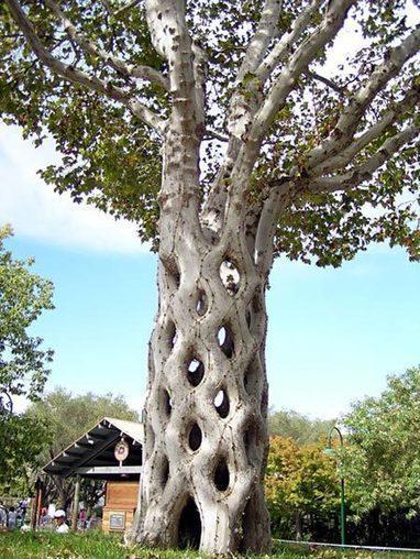 Cool Tree | Harmony Nature | Scoop.it