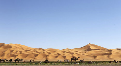 Earliest Camel Bones Contradict Bible, Archaeologists Say - Nature World News | Ancient Archeology | Scoop.it