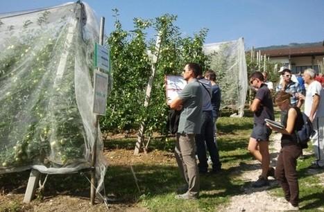 www.ladigetto.it - Ad agosto tre mercoledì sulla gestione sostenibile del frutteto | Fondazione Mach | Scoop.it