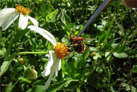 Les abeilles sociales marquent les fleurs dangereuses avec des signaux chimiques | EntomoNews | Scoop.it