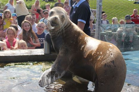 New training programme for sea lions at Tynemouth aquarium - ChronicleLive | CE Project: what career do I want | Scoop.it