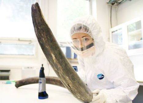 Mammoth genome sequence completed | WWWBiology | Scoop.it