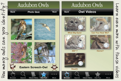 Audubon Owls - Discover the Owls In Your Neighborhood | iPads, MakerEd and More  in Education | Scoop.it