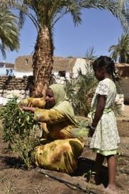 Om Habibeh Foundation and Aswan Directorate of Agriculture to Support 5,000 Farmers | Nubia; daily life and cultural heritage | Scoop.it