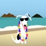 Un CouchSurfing pour chiens ! | Voyage : secrets d'organisation | Scoop.it