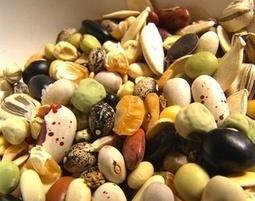 organic seeds | mrfothergills18 | Scoop.it