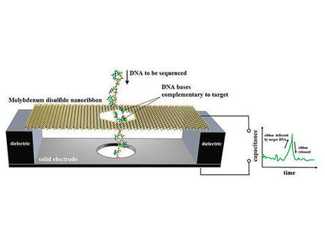 A Superfast DNA Sequencer Based on Motion Detection | SynBioFromLeukipposInstitute | Scoop.it
