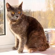 7 Tips for Making Your Outdoor Cat an Indoor Cat | Pet News | Scoop.it