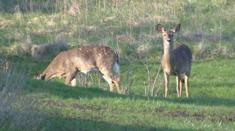 'Stop Spraying New Brunswick' blames deer population decline on herbicides | Nova Scotia Hunting | Scoop.it