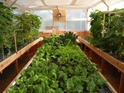 How are Portable Farms Different than other Aquaponics Systems? | Aquaponics World View | Scoop.it