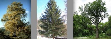 Toiture en bois - Maisons Nature Bois | toit toi mon toit toi toi ma toiture | Scoop.it