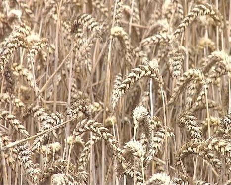 Les nouveaux modèles agricoles   Agr'energie   Scoop.it