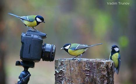 14 photos rares qui témoignent de la curiosité animale | Photo 2.0 | Scoop.it