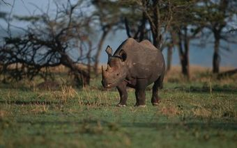 Is Namibia on to THE Solution to save the Rhino from Poachers? | What's Happening to Africa's Rhino? | Scoop.it