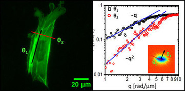 Fluorescence Microscopy Given New Power | Scientificus | Scoop.it