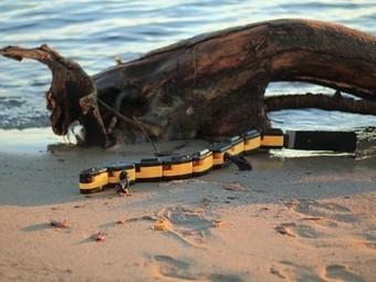 Robotic Salamander Walks on Land, Swims in Water | Biomimicry | Scoop.it