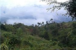 Rain Forest Environmental Problems | Trails.com | Ecosystems | Scoop.it