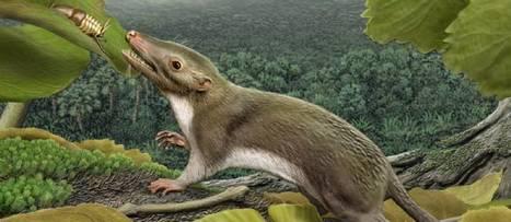 L'ancêtre commun des mammifères identifié | Merveilles - Marvels | Scoop.it