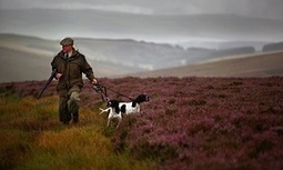 Peatlands burn as gamekeepers create landscape fit for grouse-shooting | GarryRogers NatCon News | Scoop.it
